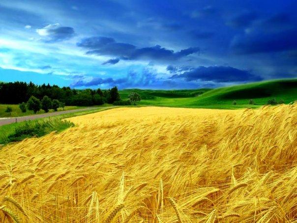 Картинки про українську природу